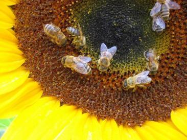 Il 4 ottobre si svolgerà la I^ edizione dell'evento 'Il giardino delle api' organizzato dall'associazione culturale 'Le Fonti'
